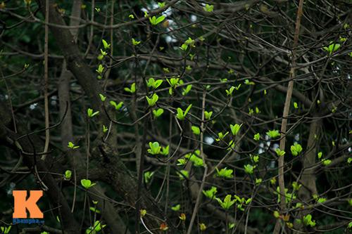 Hà Nội đẹp lạ mùa thay lá-11