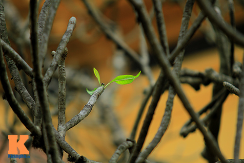 Hà Nội đẹp lạ mùa thay lá-12