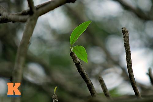 Hà Nội đẹp lạ mùa thay lá-13