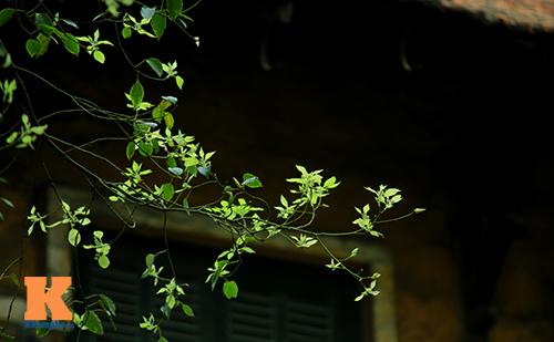 Hà Nội đẹp lạ mùa thay lá-16