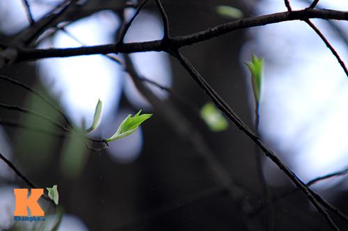 Hà Nội đẹp lạ mùa thay lá-2