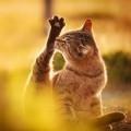 Đi đâu - Xem gì - Vũ điệu mèo và nắng ở đất nước mặt trời mọc