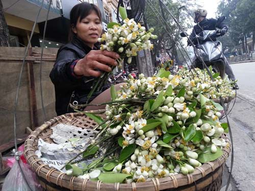 hoa buoi gia 250.000 dong/kg hut khach ha noi - 2