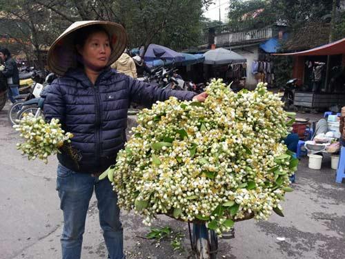 hoa buoi gia 250.000 dong/kg hut khach ha noi - 3