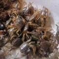 Mua sắm - Giá cả - Thực hư về việc thủy sản HN nhiễm chì