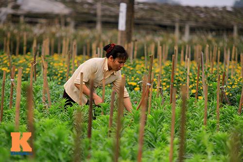 hoa loa ken khoe sac trong tiet troi thang tu - 9