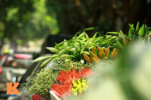 hoa loa ken khoe sac trong tiet troi thang tu - 13