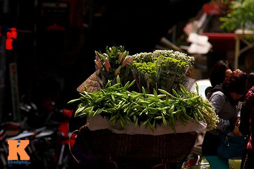 hoa loa ken khoe sac trong tiet troi thang tu - 12