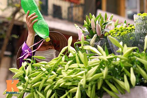 hoa loa ken khoe sac trong tiet troi thang tu - 15