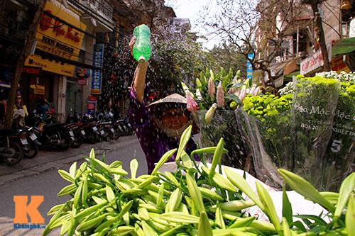 hoa loa ken khoe sac trong tiet troi thang tu - 14