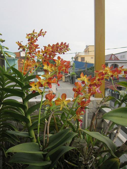 hang tram gio hoa nui rung khoe sac tham giua long tp.hcm - 6