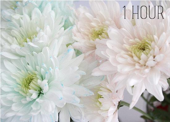 bi quyet nhuom mau hoa ruc ro don tet - 4