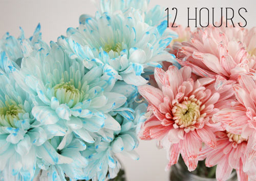 bi quyet nhuom mau hoa ruc ro don tet - 5
