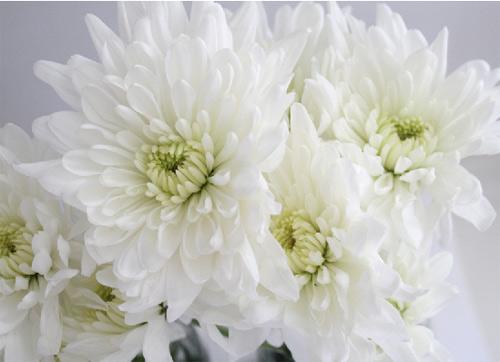 bi quyet nhuom mau hoa ruc ro don tet - 3