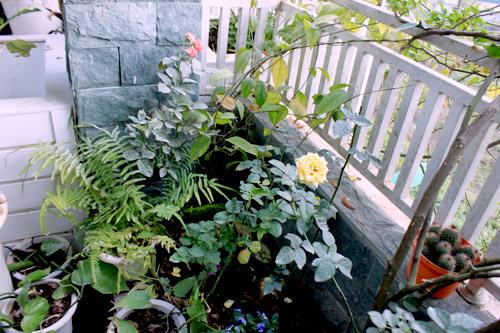 Cải tạo vườn sân thượng trong 3 tuần đẹp mê ly-7