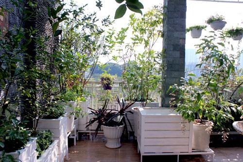 Cải tạo vườn sân thượng trong 3 tuần đẹp mê ly-14