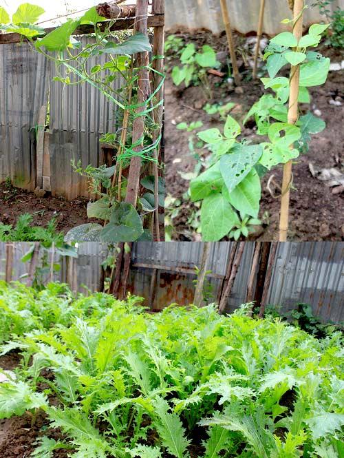 Cải tạo vườn sân thượng trong 3 tuần đẹp mê ly-10