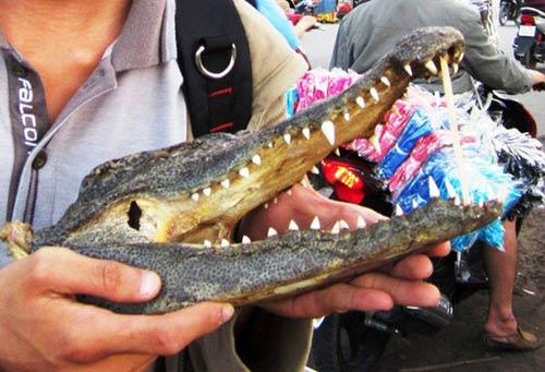 Tràn lan thịt cá sấu lề đường-2