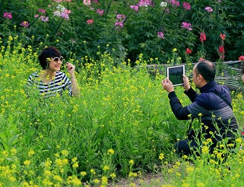 Đổ xô chụp ảnh tại thung lũng hoa Hồ Tây-13