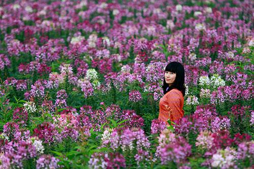 Đổ xô chụp ảnh tại thung lũng hoa Hồ Tây-8