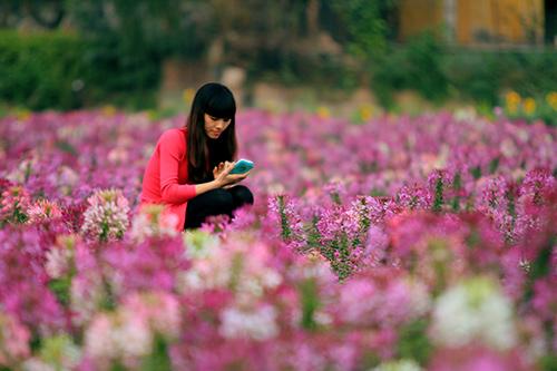 Đổ xô chụp ảnh tại thung lũng hoa Hồ Tây-15