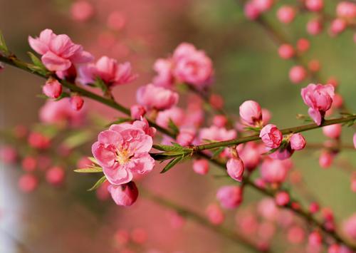 duoi du hoa lanh nho tranh theu hoa dao - 1