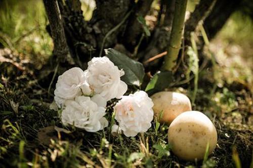 1 tuan trong hong lon nhanh, hoa nhieu nho khoai tay - 1
