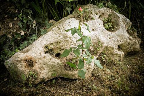 1 tuan trong hong lon nhanh, hoa nhieu nho khoai tay - 11