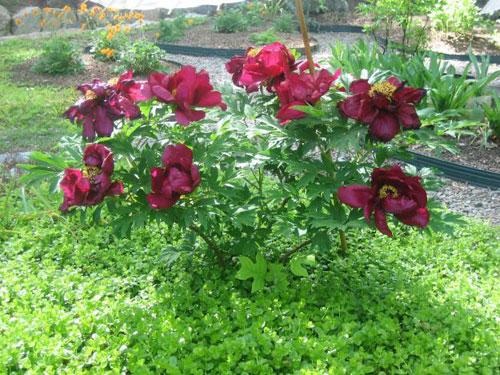 Vườn 4000m2 trăm hoa đua nở quanh năm ở New York-4