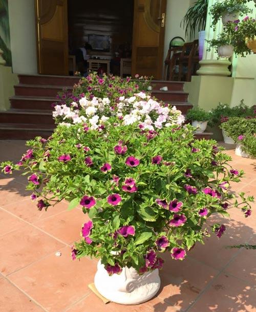 yen bai: ban nha pho, mua nha ngo de trong 100 cay hoa - 2