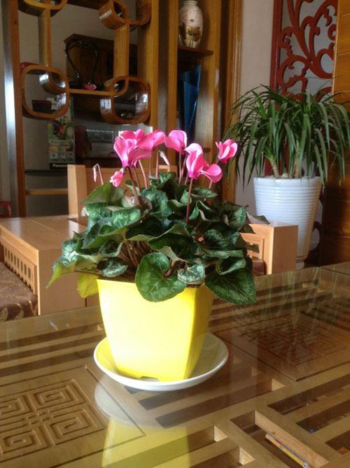 yen bai: ban nha pho, mua nha ngo de trong 100 cay hoa - 6