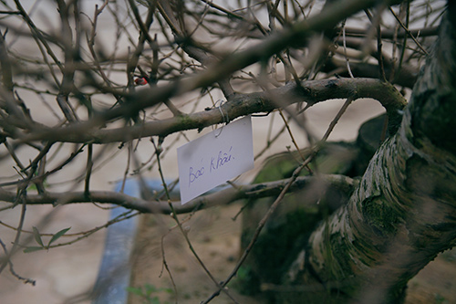 kham pha cho dao tien ti tren duong lac long quan - 7