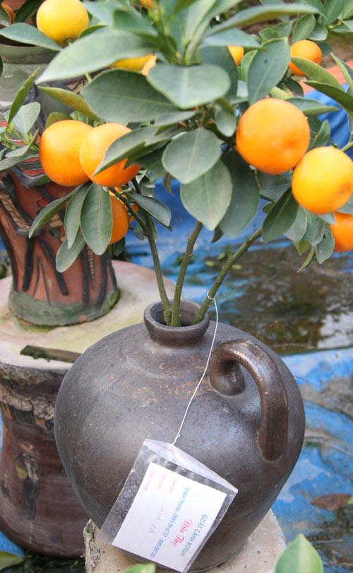 quat bonsai tien trieu cho dan sanh dieu me cay - 6