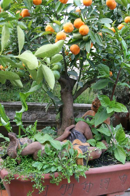 quat bonsai tien trieu cho dan sanh dieu me cay - 13