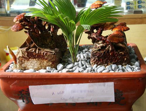 tet nay 'sot xinh xich' nam linh chi do bonsai - 3