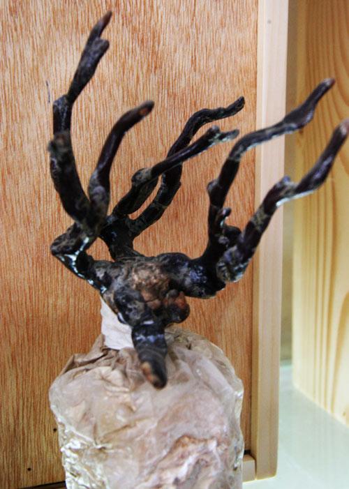 tet nay 'sot xinh xich' nam linh chi do bonsai - 15
