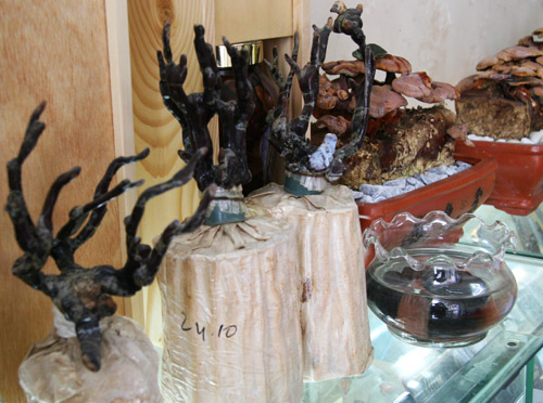 tet nay 'sot xinh xich' nam linh chi do bonsai - 16