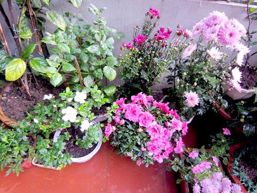 thai binh: vuon hoa tram chau khong can bi quyet cham trong - 8