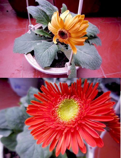 thai binh: vuon hoa tram chau khong can bi quyet cham trong - 13