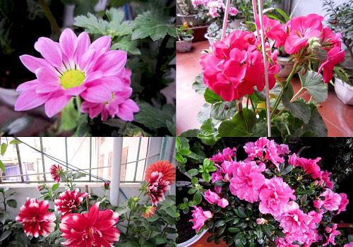 thai binh: vuon hoa tram chau khong can bi quyet cham trong - 2