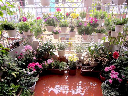 thai binh: vuon hoa tram chau khong can bi quyet cham trong - 1