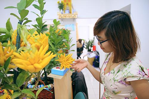 Phật thủ bonsai đẹp có giá lên đến cả chục triệu