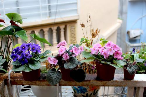 Triệu phú của trăm cây hoa đẹp - độc - lạ ở Hà Nội - 17