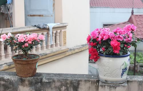 Triệu phú của trăm cây hoa đẹp - độc - lạ ở Hà Nội - 20