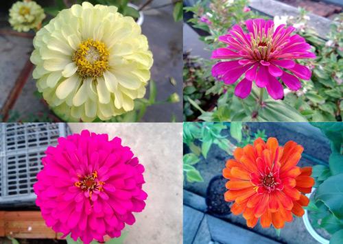 Triệu phú của trăm cây hoa đẹp - độc - lạ ở Hà Nội - 10