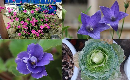 Triệu phú của trăm cây hoa đẹp - độc - lạ ở Hà Nội - 4