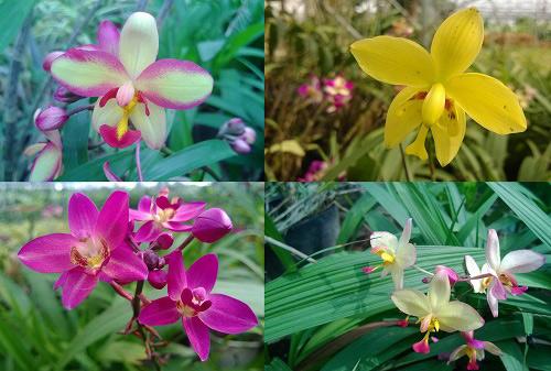 Triệu phú của trăm cây hoa đẹp - độc - lạ ở Hà Nội - 8