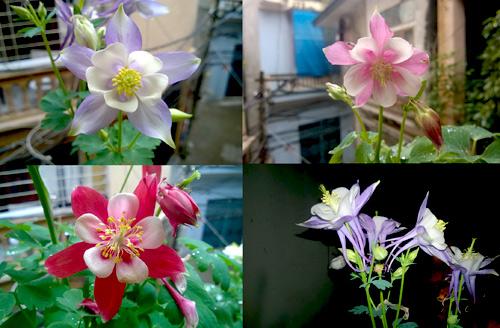 Triệu phú của trăm cây hoa đẹp - độc - lạ ở Hà Nội - 5
