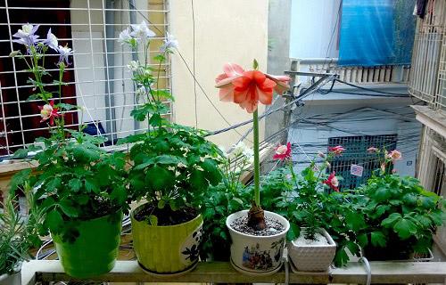 Triệu phú của trăm cây hoa đẹp - độc - lạ ở Hà Nội - 2