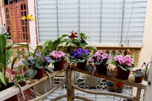 Triệu phú của trăm cây hoa đẹp - độc - lạ ở Hà Nội - 1
